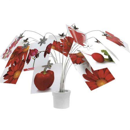 foto-display-meceta-flores-blanca