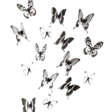 mariposas-barabtas-negras