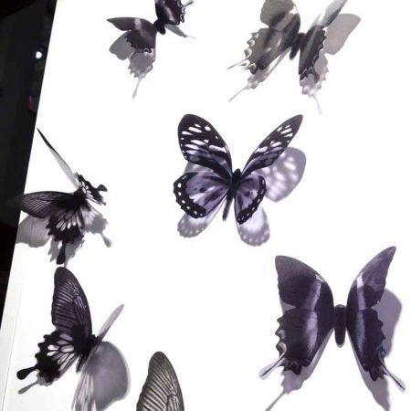mariposas-barabtas-negras-tienda