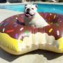 flotador-donut-chocolate-perro